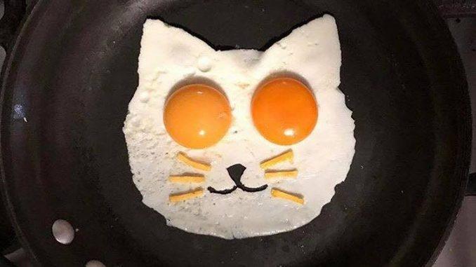 fried egg cat
